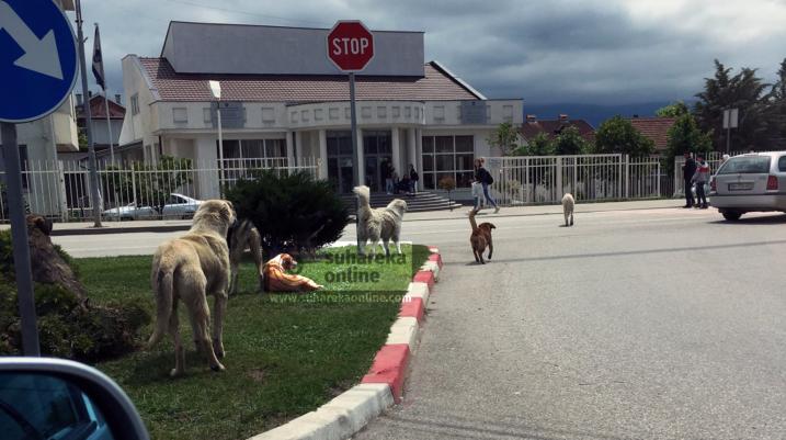 [VIDEO] Helmohen qentë në Suharekë!