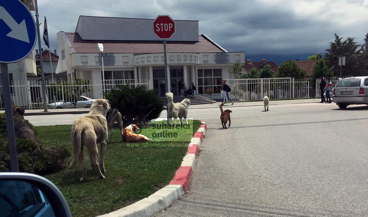 Regjistrimi i kafshëve shoqëruese i obligueshëm, ata që i braktisin do të dënohen