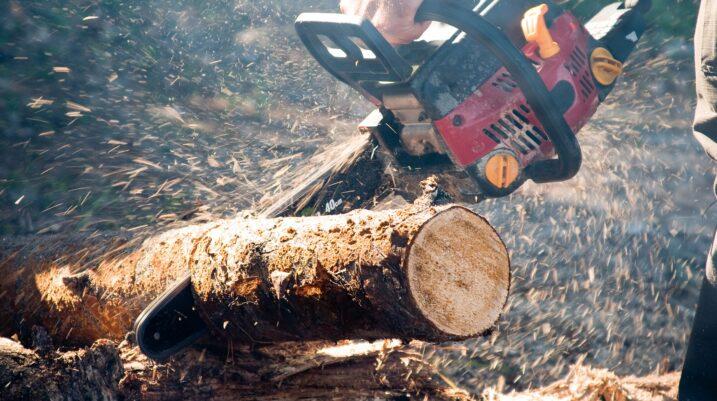 Suhareka territori më i përshtatshëm për të prerë drunjtë në mënyrë ilegale