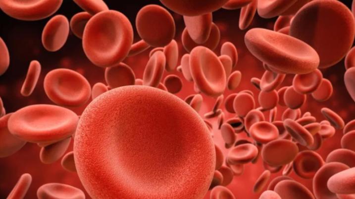 Ja si të pastroni gjakun nga yndyra