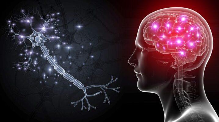 A rigjenerohen qelizat e trurit? Cilat zakone e dëmtojnë atë