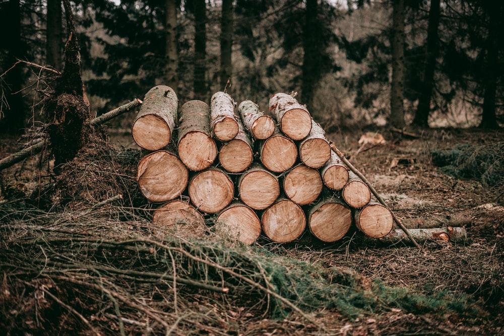 Komuna e Suharekës përsëritë konkursin për 3 vende të lira pune për roje pylli