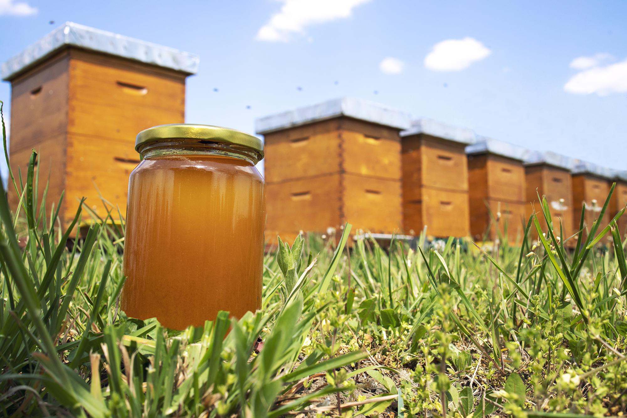 Arsyet se pse mjalti është antibiotiku më i mirë