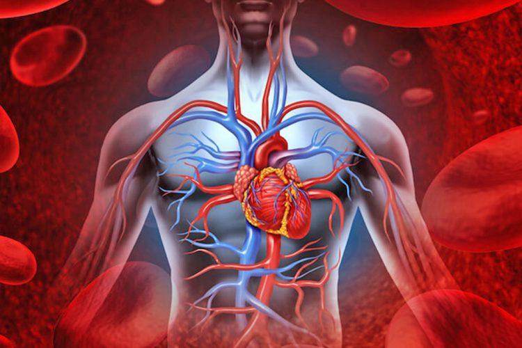 Rreziku nga qarkullimi i dobët i gjakut – përmirësimi në mënyrë natyrale