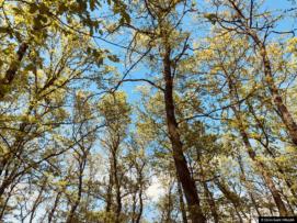 Shtigjet e Ecjes – Suharekë