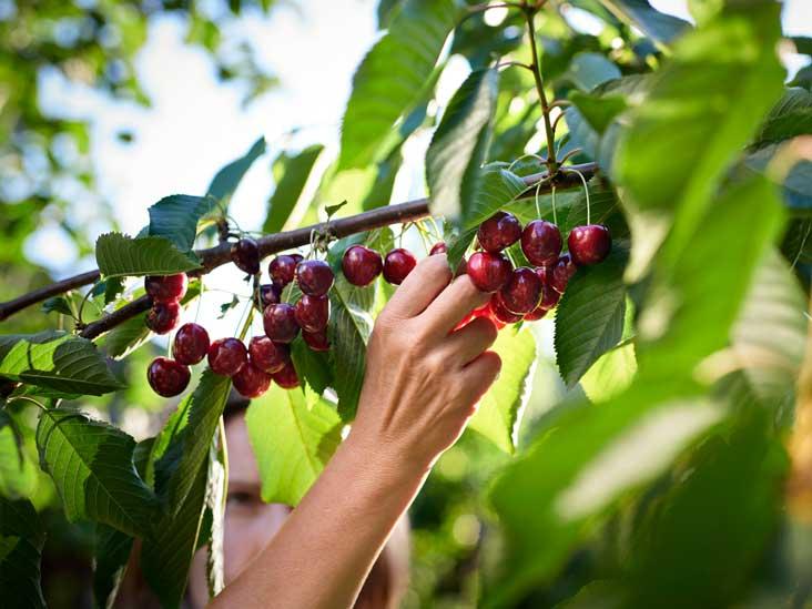 Frutat dhe perimet më të freskëta të muajit maj